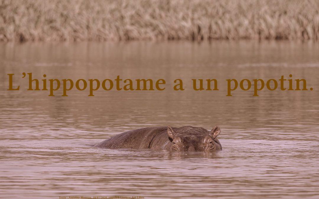 Popotin